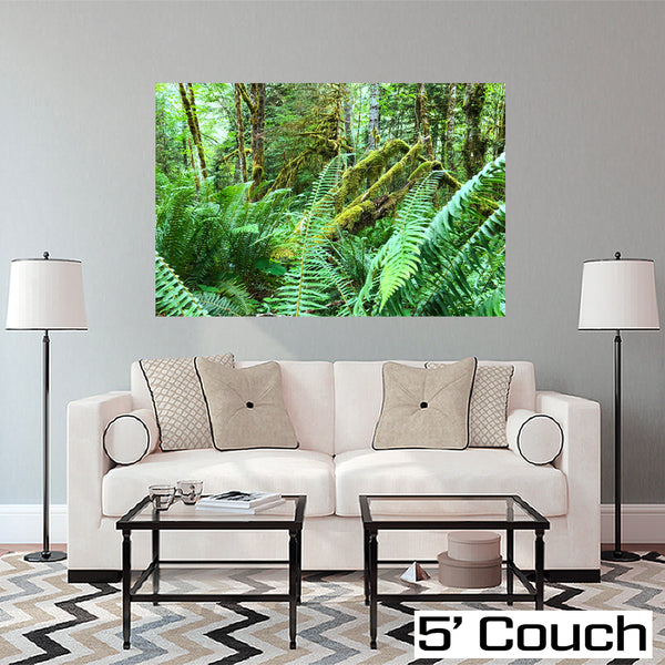 Rich Sanders' Rain Forest Ferns Photo