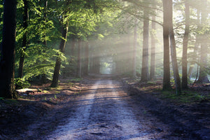 Light road landscape nature - W-Photographie