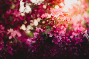 Pink green and purple flowers during daytime - W-Photographie