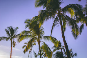 Low angle photography of coconut trees - W-Photographie