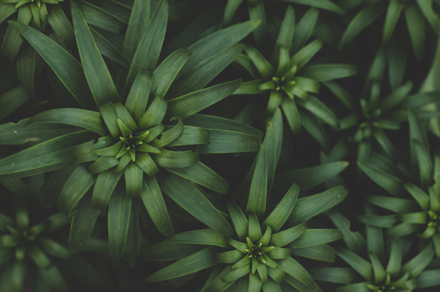 Green plants - W-Photographie