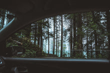 Charger l'image dans la galerie, Scenic view of forest from car - W-Photographie
