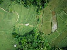 Charger l'image dans la galerie, Aerial photography of green field - W-Photographie