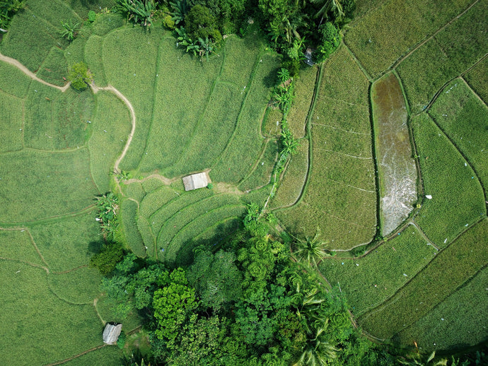 Aerial photography of green field - W-Photographie