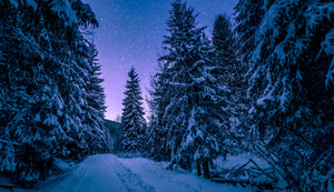 Photography of trees covered by snow - W-Photographie