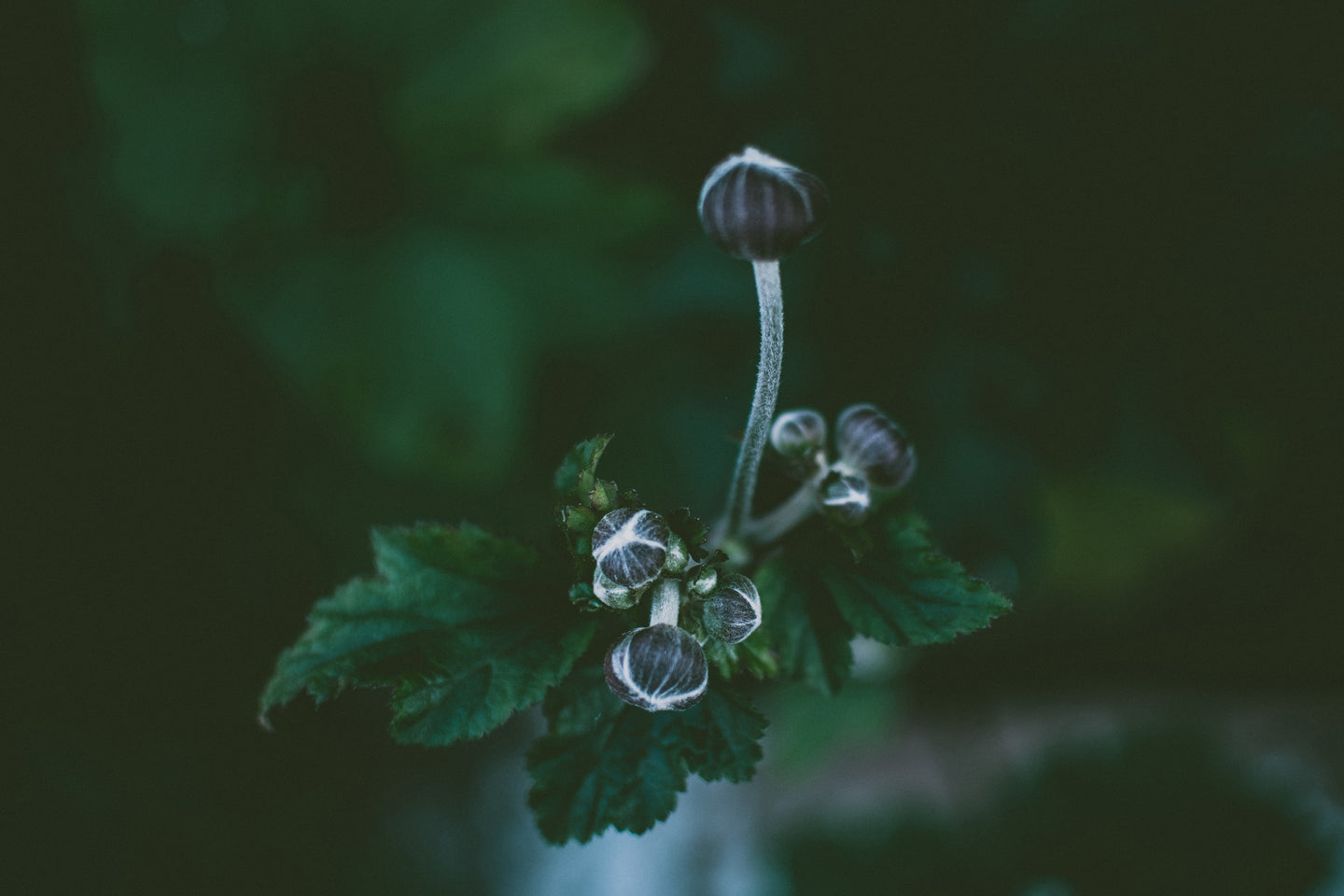 Close up photography of a flower buds - W-Photographie