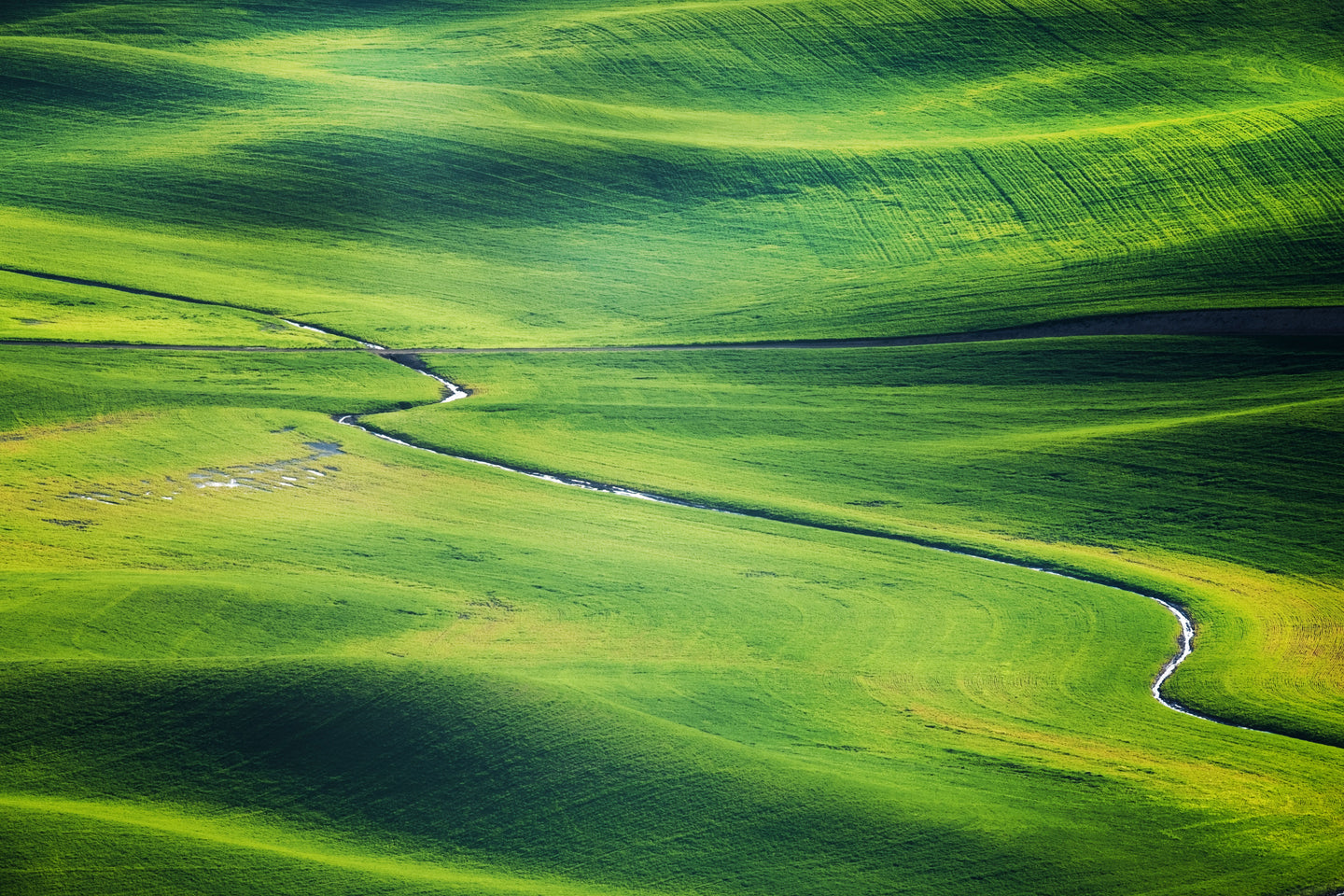 Green grass field - W-Photographie
