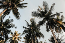 Charger l'image dans la galerie, Low angle photography of coconut trees