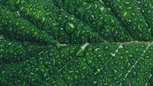 Close up photography of green leaf with drop of water - W-Photographie