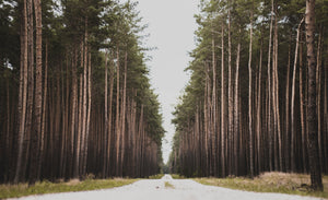 Landscape photography of trees - W-Photographie