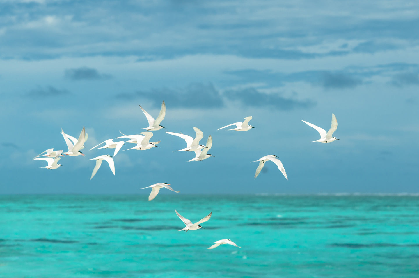 Flock of white seagulls flying over the large body of water - W-Photographie