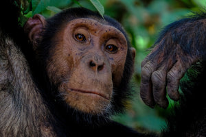 Photography of Monkey - W-Photographie
