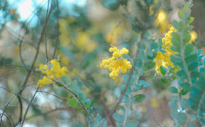 Shallow focus photography of tree with yellow petal flowers - W-Photographie