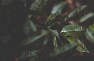 Green leaf plant - W-Photographie