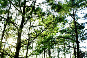 Low angle photo of tall trees - W-Photographie