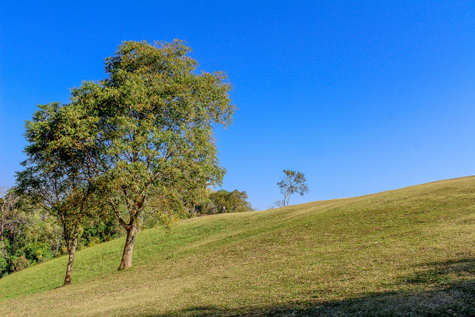 Green grass and trees - W-Photographie