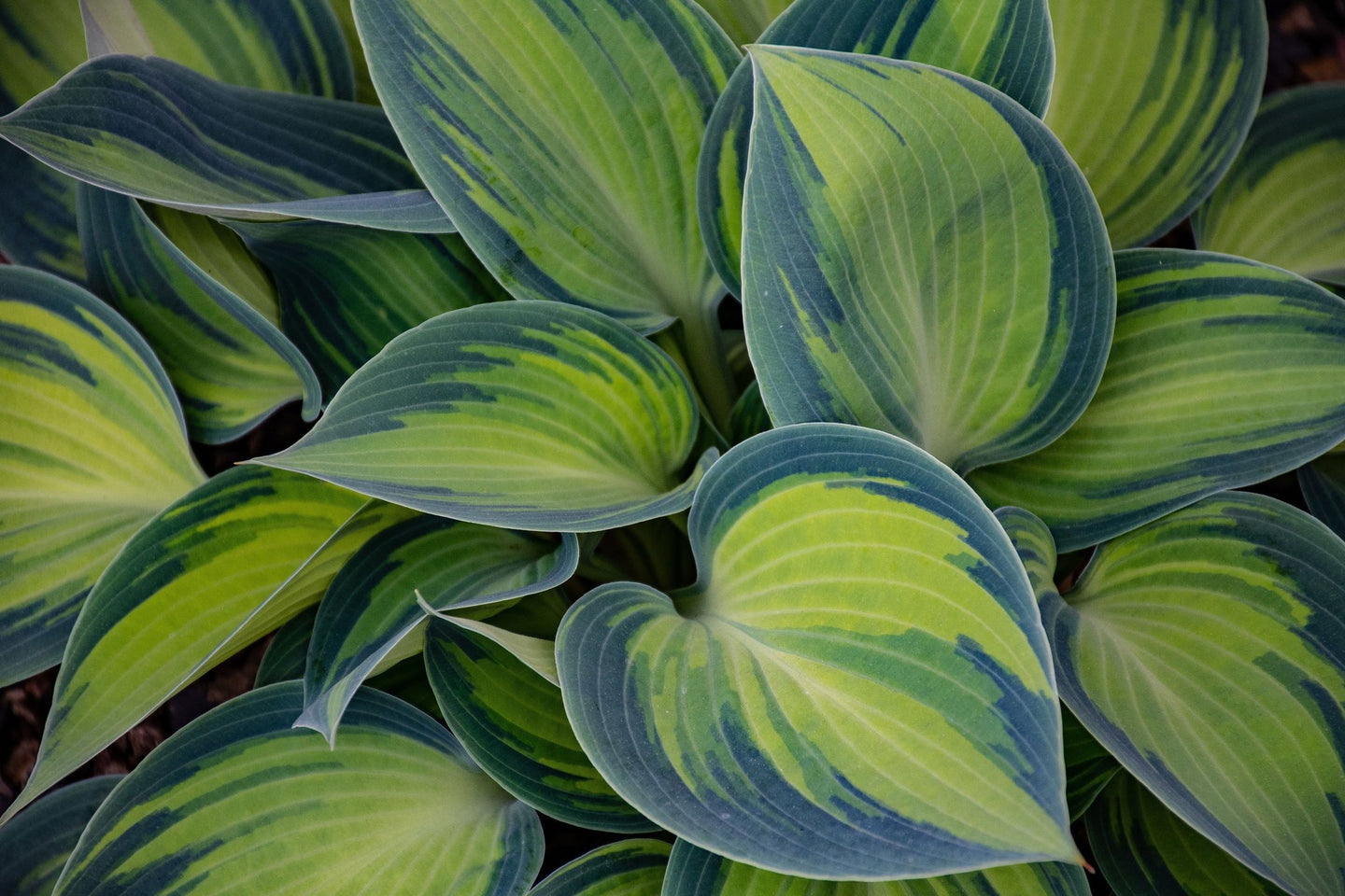 Green and blue leaf plant - W-Photographie