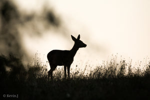 DEER 004 - W-Photographie