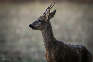 Deer 001 - W-Photographie