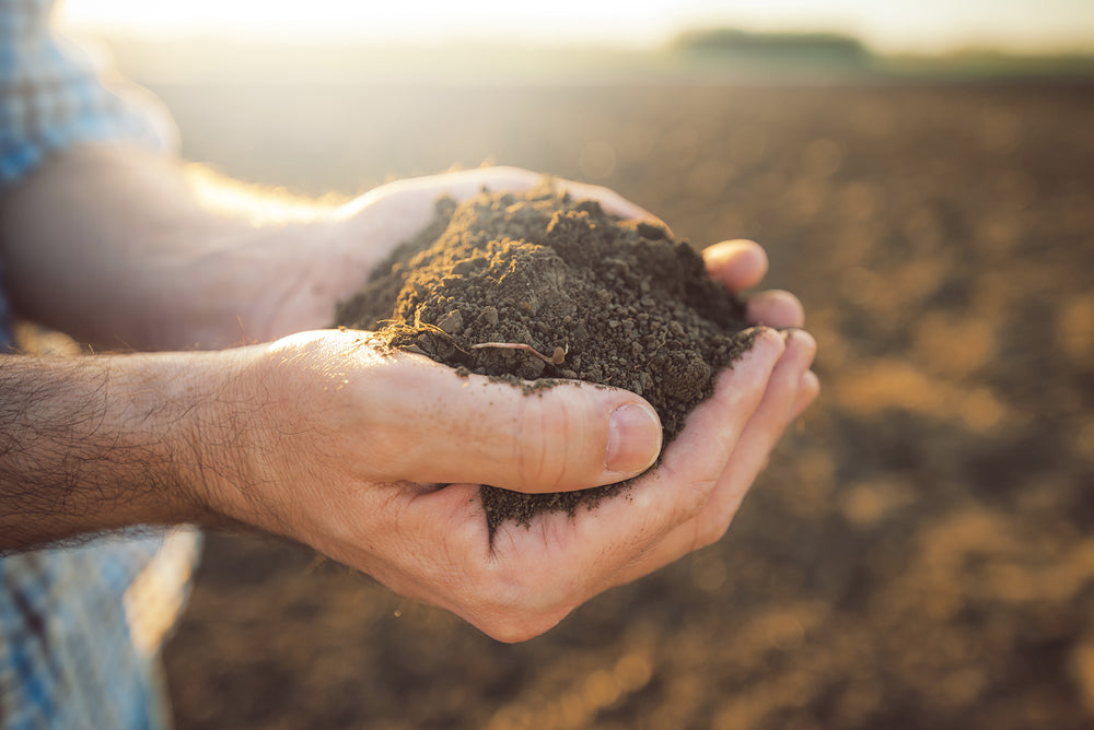 Why Organic Matters: SOIL