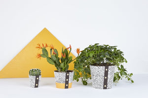 Plant Pot Cover - Spores Medium