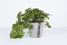 Plant Pot Cover - Spores Large
