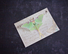 Flutter Designs Luna Moth hair clip presented on a glossy gift postcard.