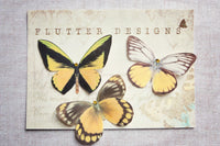 Yellow silk butterfly hair clips on a glossy presentation postcard