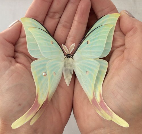 Chinese Moon Moth Hair Clip