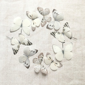 Natural coloured silk butterflies with Swarovski Crystals