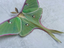 Green Luna Moth Hair clip with Swarovski Crystals