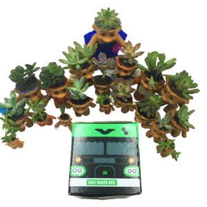 troll succulent cbd pop up weed bus box pot head box