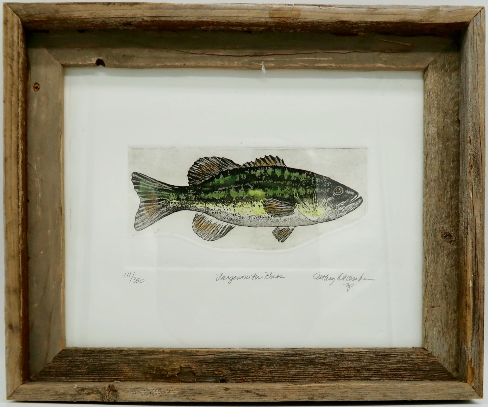 """Largemouth Bass"" by Cathy December"