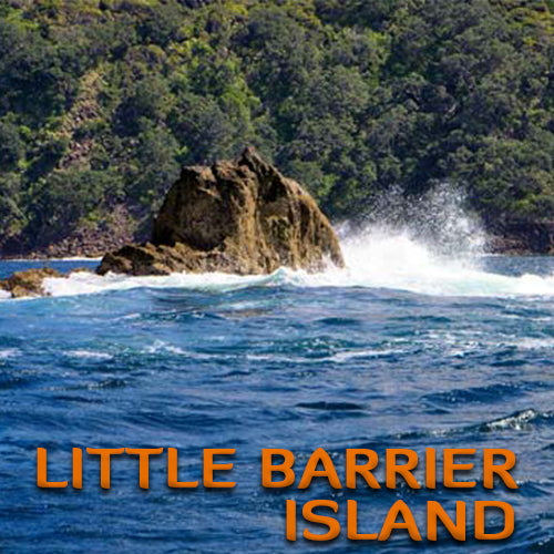 Little Barrier Island Dive Trip (2 Dive Trip)