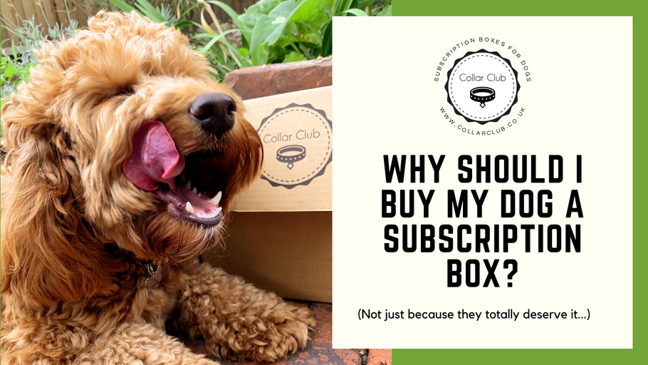WHY SHOULD I BUY A DOG SUBSCRIPTION BOX?