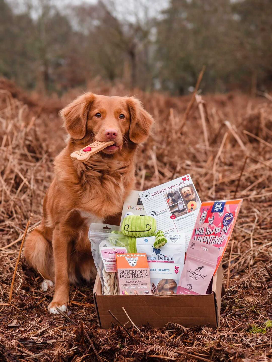Collar Club Valentine's Gift Box for Dogs