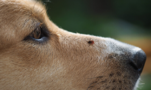 Collar Club Natural Remedies for Insect Bites