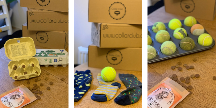 Collar Club Ideas for Keeping Busy At home - Tips for Dog lovers and Owners