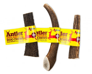 Medium Antos Antler