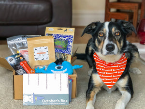 Collar Club Monthly Subscription Box