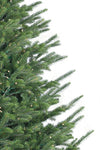 Del Mar Fraser Fir Tree