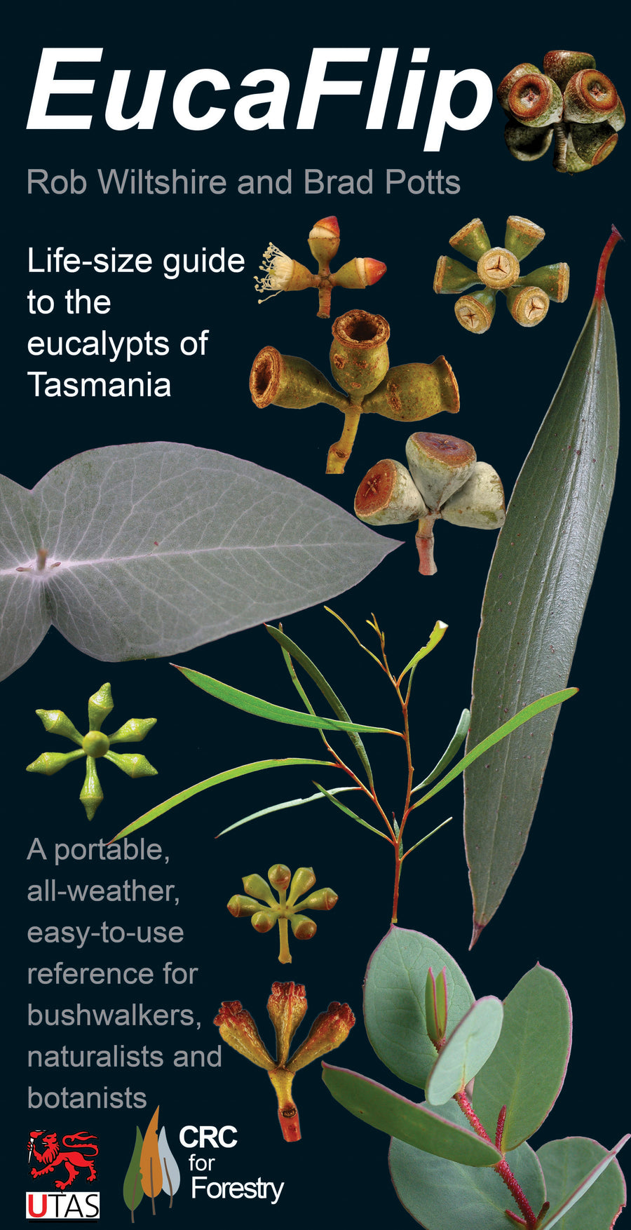 EucaFlip: Life-Sized Guide to the Eucalypts of Tasmania