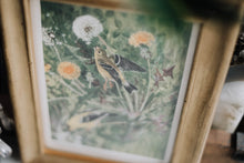 Load image into Gallery viewer, 1800s Goldfinch Hand-Colored Lithograph