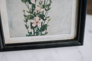 1800s Sea/Marsh Pink Hand-Colored Lithograph
