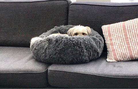 dog in bed on a Faux Fur Pet Bed