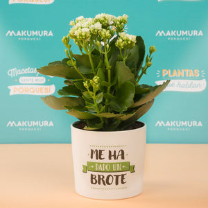 Maceta decorada – Me ha dado un brote - MAKUMURA