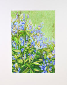 Bluebonnets drawing by Jean Blais Oliver