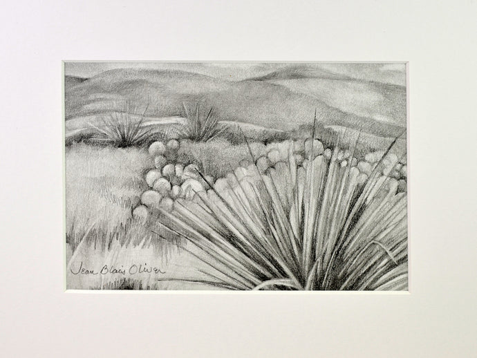 Graphite drawing of cacti by Jean Blais Oliver