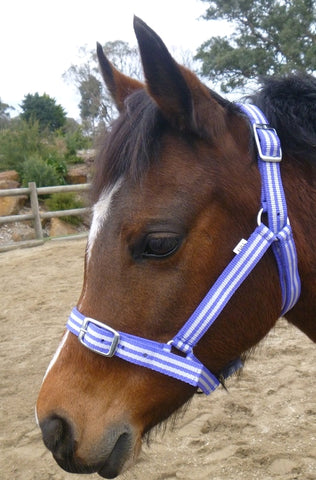 Buzz Headstall Purple Stripe