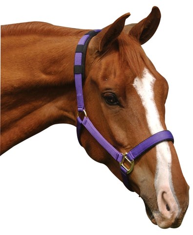 Deluxe Transport Halter with Anti Gall Padding